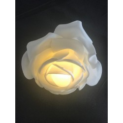 Rose blanche lumineuse