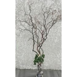 Branche de saule tortueux